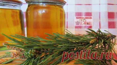 Сосновый сироп (сосновый мёд) из побегов сосны | Кулинария