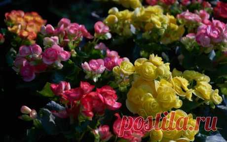 Как правильно устроить клумбу с розами: 3 золотых правила | Рекомендательная система Пульс Mail.ru