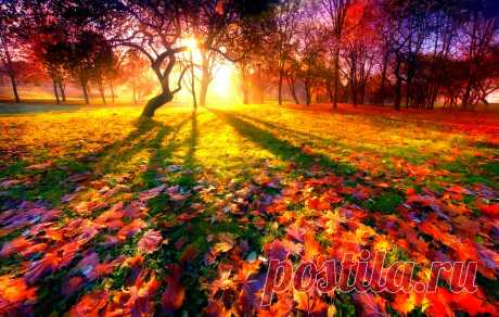 Красивая осень: фото и картинки осени.