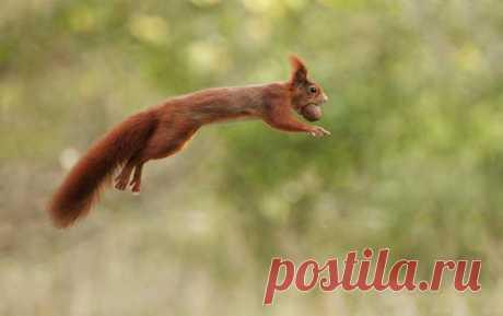 Замечательные фотографии животных от Юлиана Рада Замечательные фотографии животных от Юлиана РадаЮлиан Рад (Julian Rad) — талантливый 26-летний фотограф дикой природы и режиссер из Австрии.Он занимается