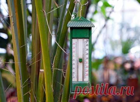 Какая температура нужна комнатным растениям на Supersadovnik.ru