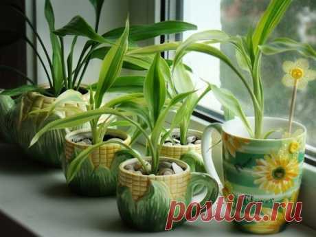 7 лучших растений для очистки воздуха внутри помещения: — Полезные советы