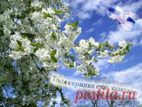 Не проси у судьбы (Ирина Истомина) / Стихи.ру - национальный сервер современной поэзии