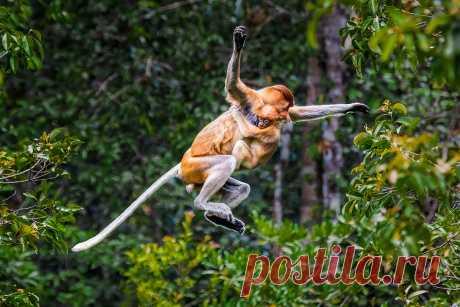 Сергей Савви: «Дикие животные — мои главные модели» — Российское фото