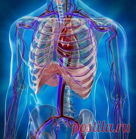 Как мы губим свое здоровье дыханием... - медиаплатформа МирТесен Вопреки распространенному мнению глубокое дыхание не является полезным, так как из организма удаляется значительный объем углекислого газа. Полезно уменьшать глубину дыхания. Если удлинять ДЫХАТЕЛЬНЫЕ ПАУЗЫ, кровоток и ткани лучше насыщаются кислородом и СО2, восстанавливаются обменные механизмы,