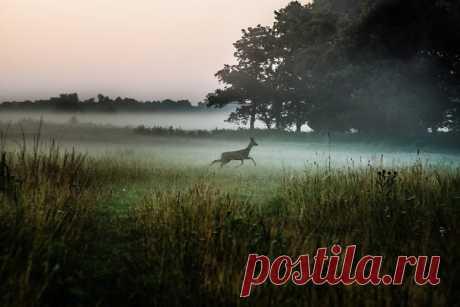 Перед восходом солнца у реки Оскол в Белгородской области. Автор фото – Вячеслав Тутанин: nat-geo.ru/community/user/171033/