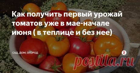 Как получить первый урожай томатов уже в мае-начале июня ( в теплице и без нее) Если не терпится попробовать первых помидорок со своей грядки, можно предпринять ряд шагов, которые позволят получить супер ранний урожай. Причем, особенных сложностей такие шаги не вызывают. Главное – все делать своевременно и по плану. Особенно такие советы пригодятся тем, кто выращивает томаты на продажу. Они реально работают. Начать, конечно, нужно с выбора сорта. Получить урожай в мае можно с