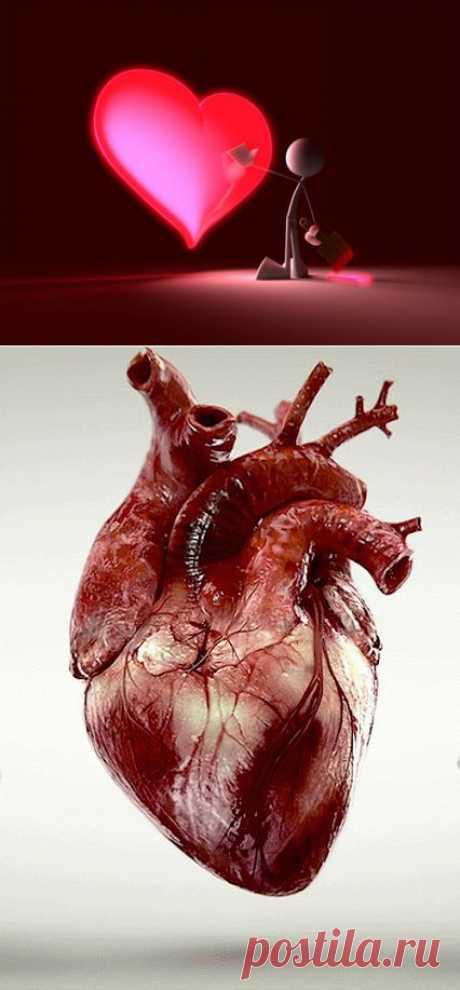 Наше сердце | КРАСОТА И ЗДОРОВЬЕ