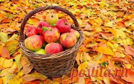 Осеннее меню. Блюда из яблок