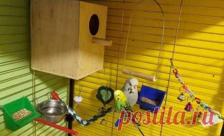 Этапы строительства гнездового домика для волнистых попугаев