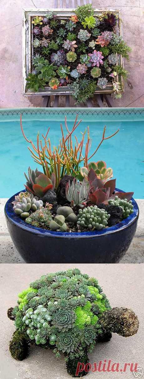 Garden of succulents, flower compositions