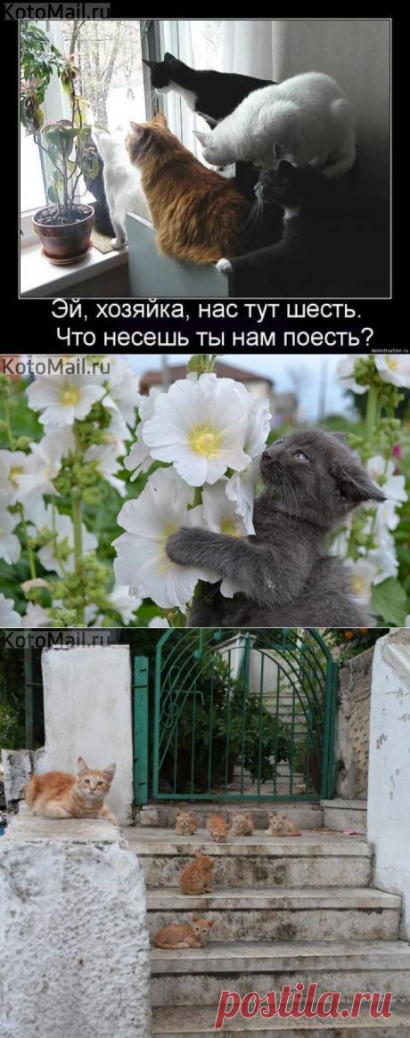 Что несёшь? | KotoMail.ru