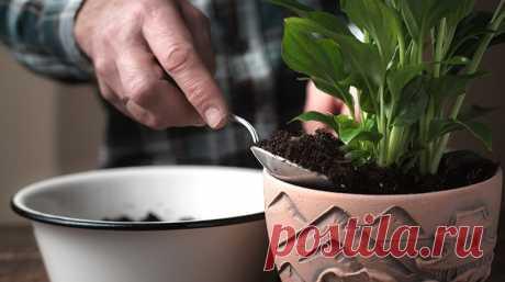 Какой грунт подойдет для выращивания спатифиллума? Спатифиллум – одно из красивейших комнатных растений. Как правильно подобрать грунт для спатифиллума, какая земля лучше всего подойдет для «женского счастья»? В статье можно узнать о составе грунта,о необходимых требованиях к почве для этого комнатного цветка.