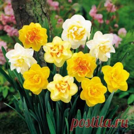Я март меняю на апрель, В дыхание тепла поверив… А за окном поёт капель, Распахивая в сердце двери. Меняю зиму на весну, Снегов печаль - на солнца радость, Обыденность – на новизну, И горечь сна – на утра сладость. Меняю тихий свой мирок На разноцветных красок буйство, И отрешенность зимних строк - На пробуждения безумства! О. Сполохова