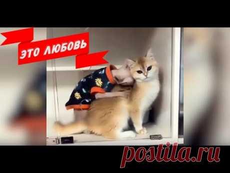 ПРИКОЛЫ С КОТАМИ | СМЕШНЫЕ КОТЫ И КОШКИ 2019 | ТЕСТ НА ПСИХИКУ😅😻 - YouTube