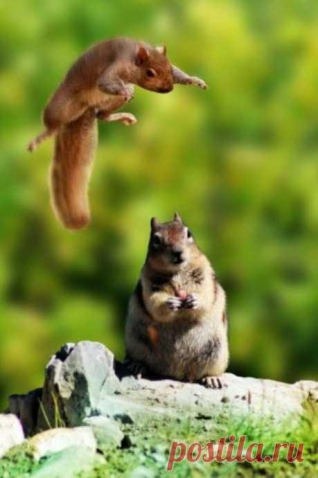 Ninja squirrel attack