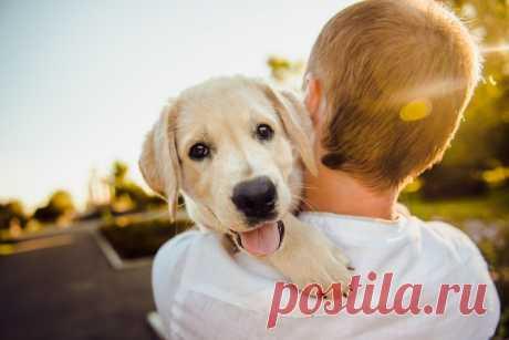 Ученые опубликовали 10 пунктов, которые помогут сделать вашу собаку счастливее Эксперты из университета Сиднея проверили 10 распространенных мифов о собачьем поведении и выяснили, что хозяевам питомцев надо или не надо делать, чтобы их пес жил счастливой и комфортной жизнью. Так…