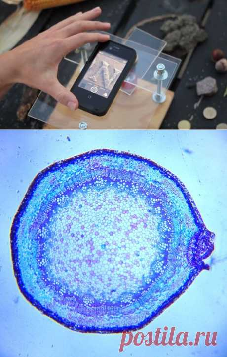Превращаем смартфон в цифровой микроскоп | MirFactov — всё самое интересное!