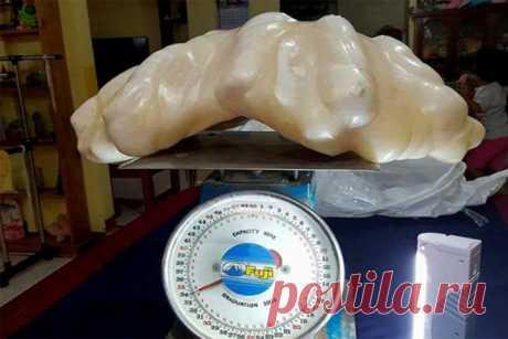 Филиппинец 10 лет хранил в качестве талисмана 34-килограммовую жемчужину за 100 млн долларов