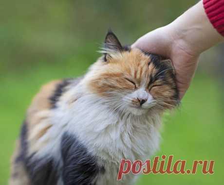 Переводчик с кошачьего языка на русский: как понять питомца, звуки, позы и движения кошки