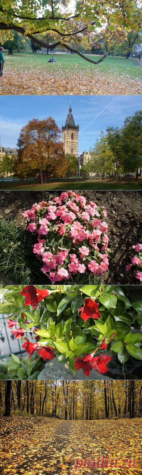 Нескучайка! Осеннее разноцветие... | ПРИСТАНЬ ОПТИМИСТОВ