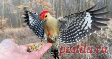 Фотограф кормит птиц с ладони и снимает их на камеру в замедленном движении Джоселин Андерсон - 'птичий фотограф' – Самые лучшие и интересные посты по теме: Животный мир, кормление с руки, красивые фотографии на развлекательном портале Fishki.net