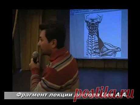 Цой А.А. Кровоснабжение Головы и Триггеры.www.zdravgid.ru .flv - YouTube