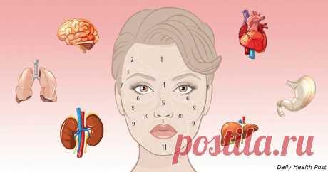 Китайская «карта лица» покажет, есть ли у вас проблемы со здоров – Тепло людских сердец, пользователь Любовь Платко | Группы Мой Мир