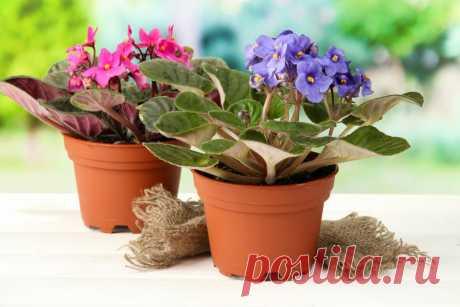 ЛУЧШАЯ подкормка для герани и комнатных растений из личного опыта. Даже если долго не пересаживали – обильно зацветут | 6 соток