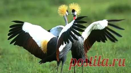 Птицы - это летающие цветы. Самые красивые птицы планеты Земля