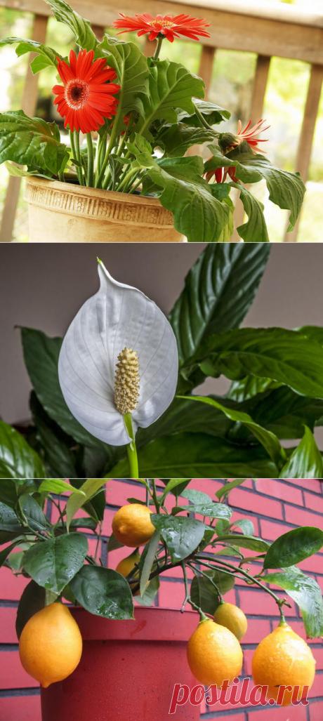15 комнатных растений, улучшающих воздух в помещении
