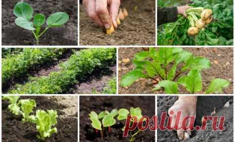 Что посеять и посадить в огороде в мае? | Все о грядках (Огород.ru)