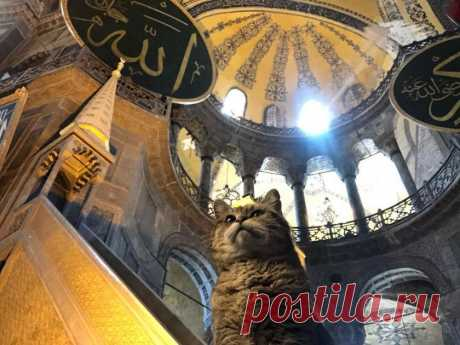 🐱 11 милых фото кота, который живет в мечети Святой Софии   Рекомендательная система Пульс Mail.ru