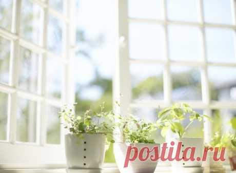 7 лучших растений для очистки воздуха внутри помещения: