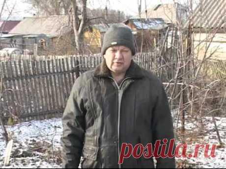 Технология выращивания винограда - Николай Сергеев 4