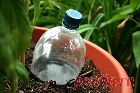 Устраиваем растениям капельный полив Простые способы обеспечить рассаду в теплицах влагой, даже если вы отсутствуете на даче целую неделю.  Хоть и обещают нам в выходные дождь, но температура по-прежнему высокая. Для растений это хорошо …