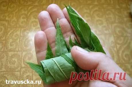 Копорский чай - приготовление в домашних условиях