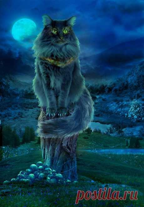 Картинки «кот Баюн» (28 фото) ⭐ Забавник