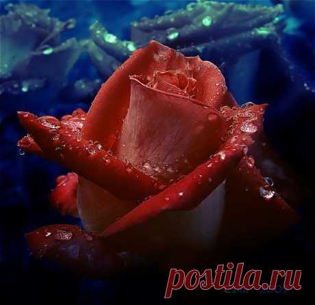 Фотографии на стене сообщества | 32 837 фотографий | ВКонтакте