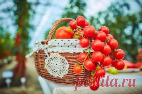 В полном порядке! Болезни томата: профилактика и защита — Ботаничка.ru