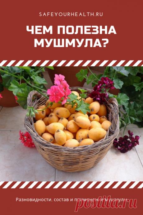 Мушмула: польза и вред экзотического фрукта. Что такое мушмула? Её разновидности, состав и применение. Полезные свойства и противопоказания. Выращивание и уход. Интересные рецепты