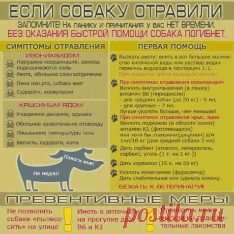 Бездомные животные в добрые руки (г. Астрахань)