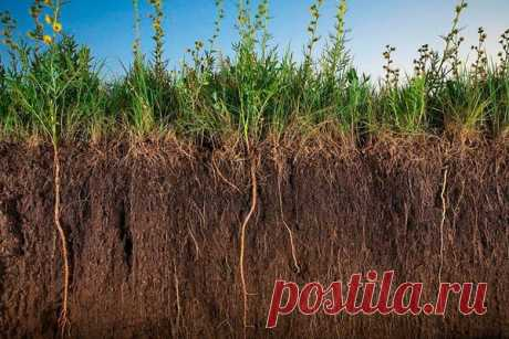 Топ-3 сидерата для улучшения структуры почвы | Блоги о даче и огороде, рецептах, красоте и правильном питании, рыбалке, ремонте и интерьере