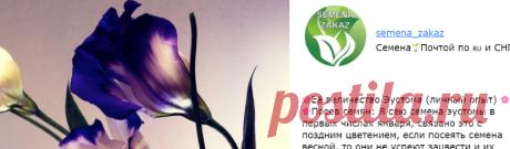 Семена почтой - интернет магазин семян по России