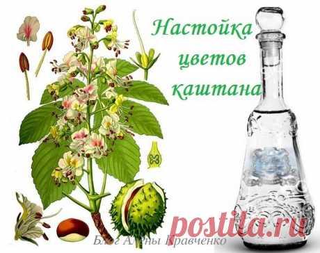 Каштан конский - лечебные свойства и применение. Настойка цветов каштана на водке – применение, как приготовить