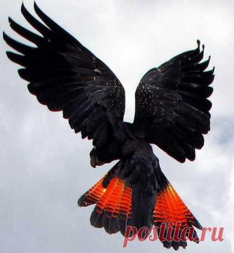 Попугаи – птицы дивной красоты.