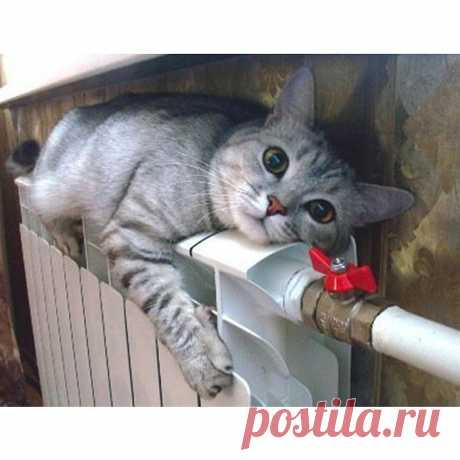 Gallery.ru / Умора! - miroslava388