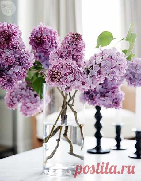 Ищите радость в каждом дне,  В рисунках капель на окне.  В восходе, в радуге росы,  И в отпечатках ног босых. Любви, тепла и позитива!  Жизнь хороша, хоть и строптива.  Здоровья, радости, удачи!  И, только так! Никак иначе!