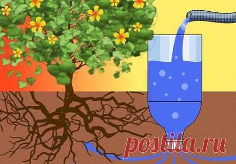 Полив помидоров бутылками: через пластиковые емкости, как сажать рассаду с применением системы, фото, видео