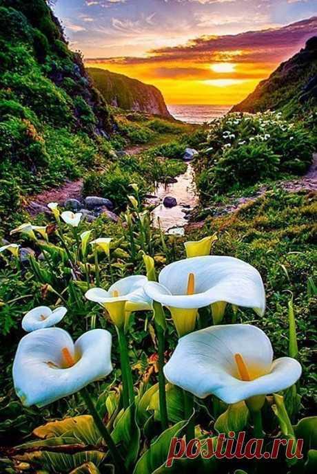 Долина диких калл, Калифорния, США